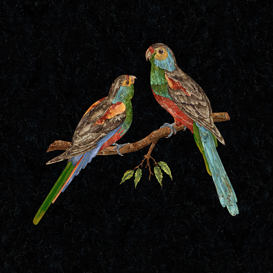 """""""Paradise-Parrot"""" by Gary Carsley"""
