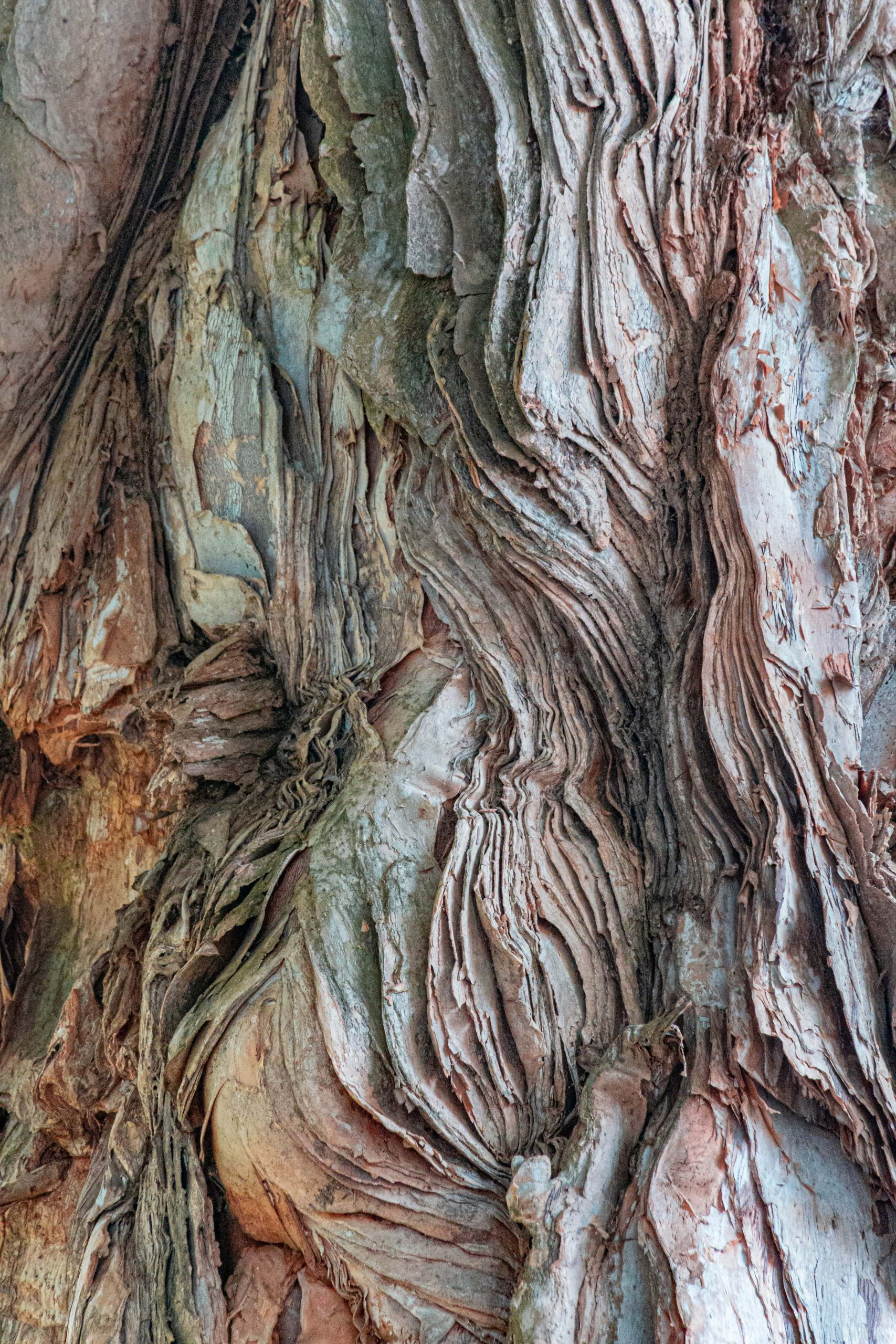 """image of Jamin Chen's piece """"Trees Up Close"""""""