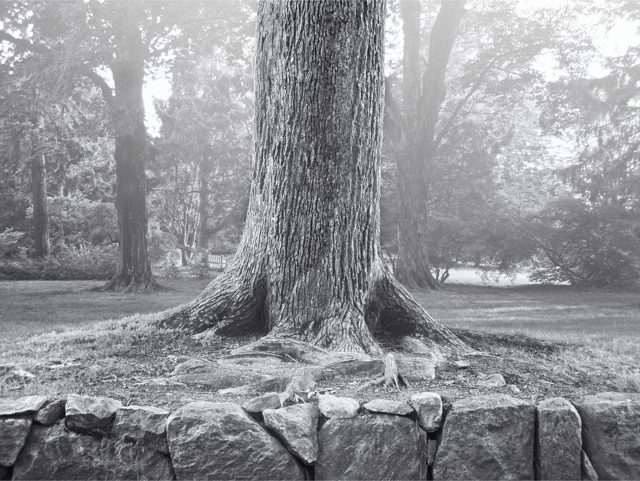 "image of John Markanich's work ""Rock Wall & Tree"""