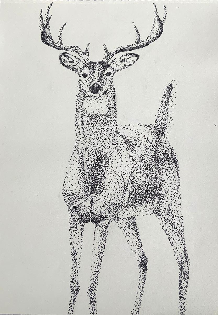 Drawing of deer