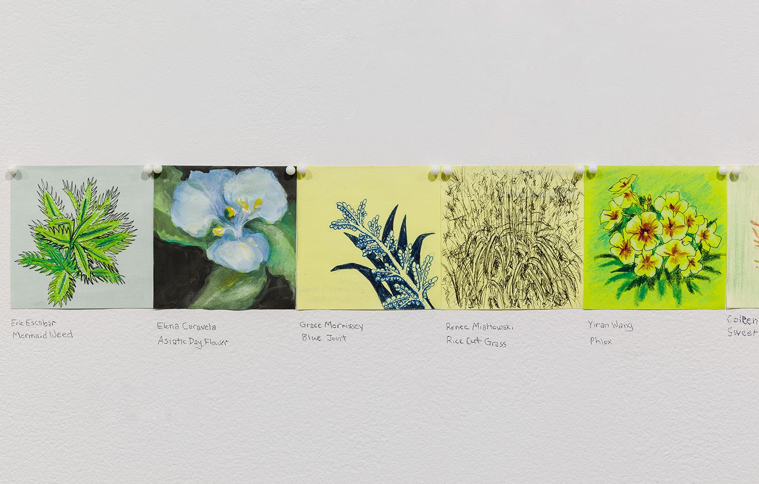 Examples of botanical drawings from Plant Line